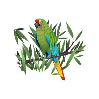 military-macaw-jpg