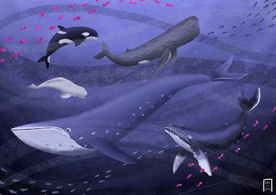 whales-jpg-2