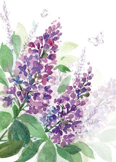 00153-dib-purple-lilac-jpg