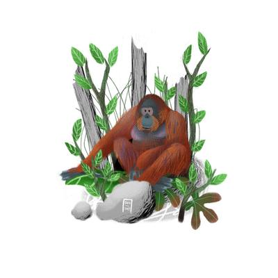 orangutan-jpg