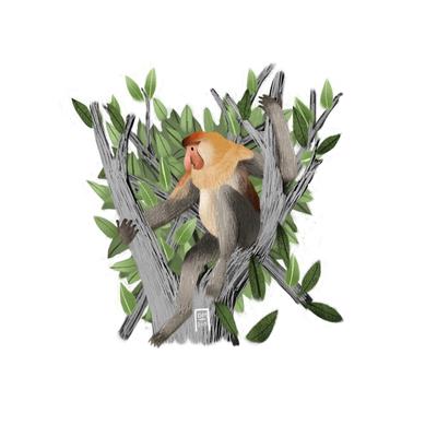 proboscis-monkey-jpg