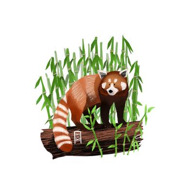 red-panda-jpg