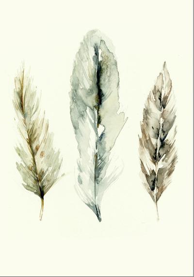 feathers-1-01-jpg