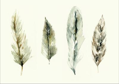feathers-2-01-jpg