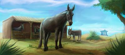 donkey-jpg-4