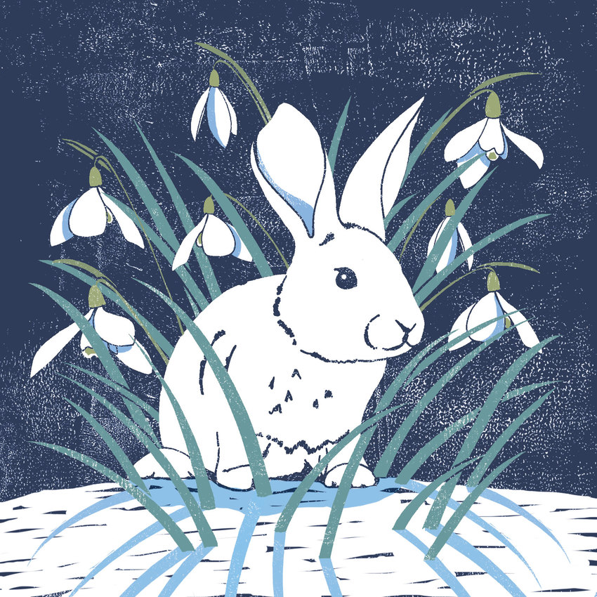 bunny-lino.jpg
