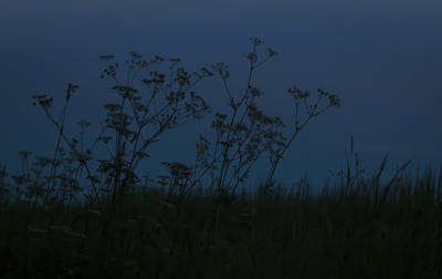 mpj-dark-meadow-blue-mood-jpg