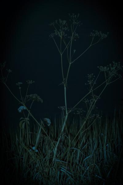 mpj-darknight-meadow-jpg