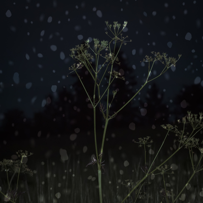 mpj-darknight-meadow-snowing-jpg