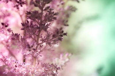 mpj-delicate-pastel-garden-2-jpg