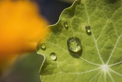 mpj-drops-on-leaf-jpg