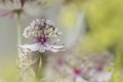 mpj-everyday-romantic-floral-jpg