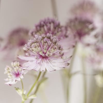 mpj-everyday-romantic-floral-sq-jpg