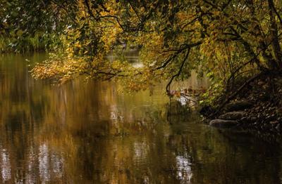 mpj-fall-landscape-jpg