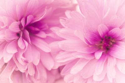 mpj-flower-romance-jpg