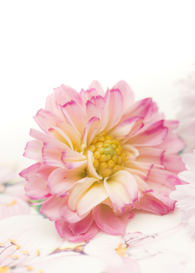 mpj-flowerbeauty-to-you-jpg