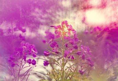 mpj-pink-meadow-jpg