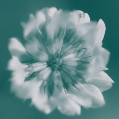 mpj-white-floral-monochrome-jpg