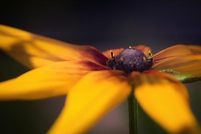 mpj-yellow-flower-power-jpg