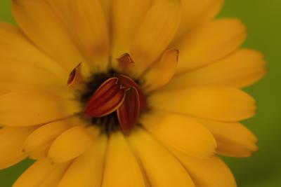 mpj-yellow-flower-shy-jpg