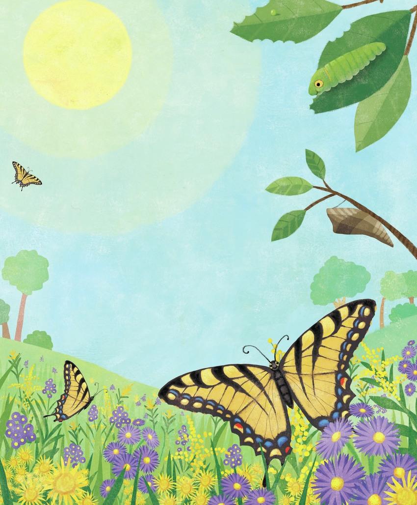 butterfly_meadow.jpg