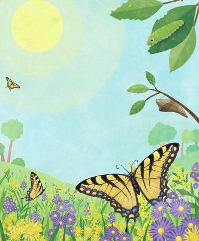 butterfly-meadow-jpg
