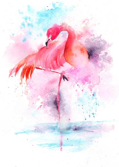 flamingo-preening-jpg-1