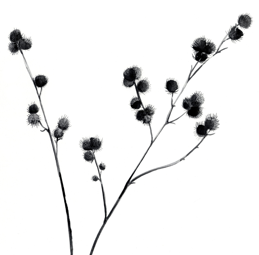 estelle corke sticky buds seedhead black and white floral.jpg