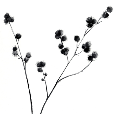 estelle-corke-sticky-buds-seedhead-black-and-white-floral-jpg