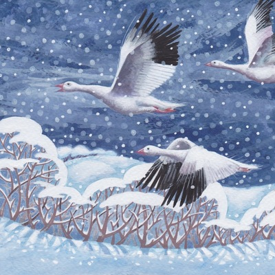 snowy-geese-jpeg-1