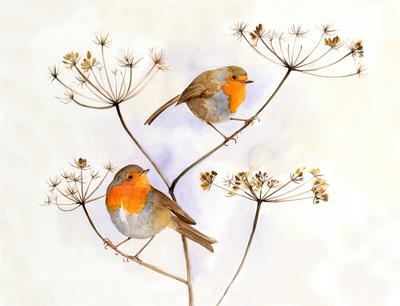 e-corke-robin-birds-christmas-winter-cute-jpg