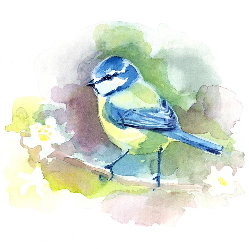 estelle corke cute blue tit bird spring.jpg
