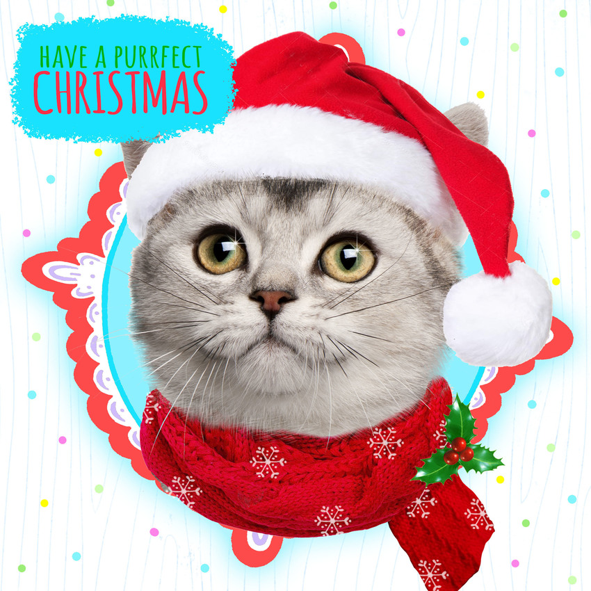 hwood cat xmas card.jpg