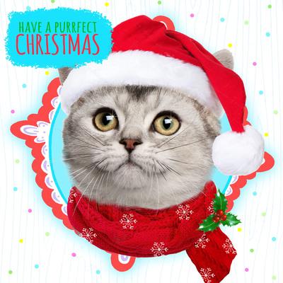 hwood-cat-xmas-card-jpg