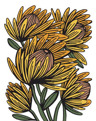 dc-yellowflowers-jpg