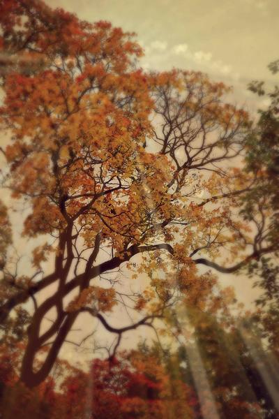 mpautumntrees-jpg