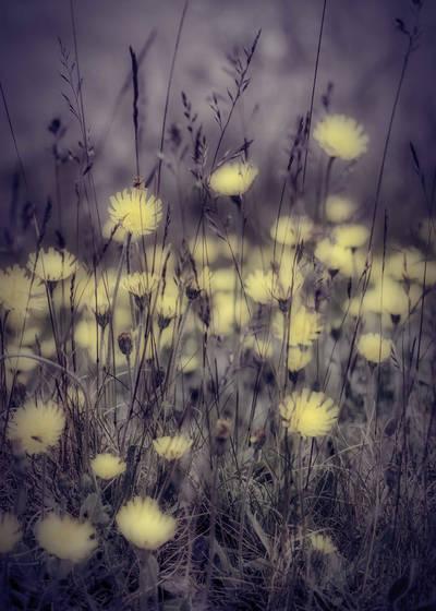 mpyellowfloralmeadow-mood-jpg