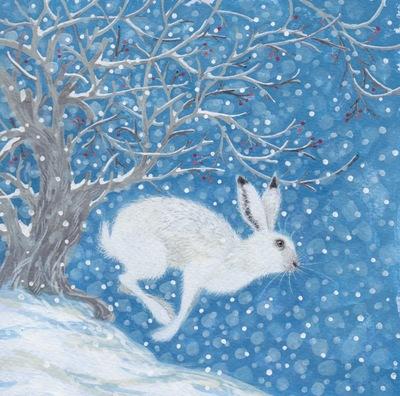 snowy-hare-jpeg