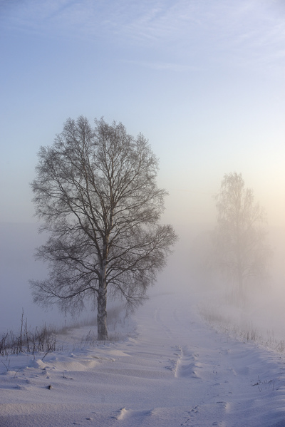 tree-in-winterfog-jpg