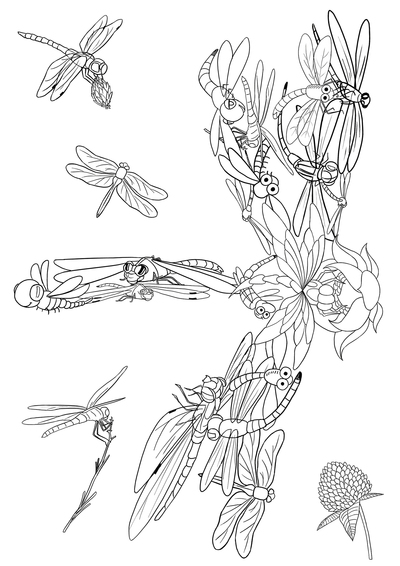 coloring-book-dragonfly-01-jpg