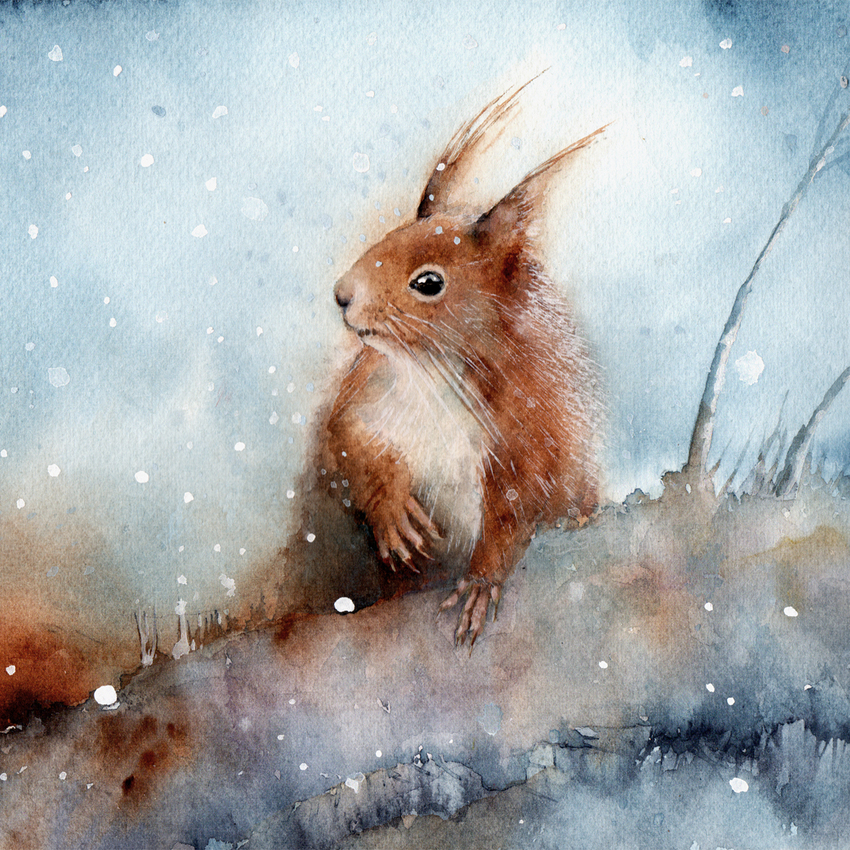 red squirrel falling snow square.jpg