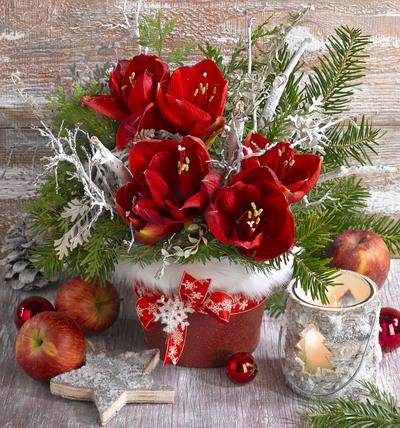 christmas-greeting-card-lmn51236-jpg