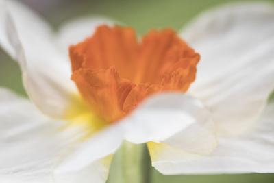 mpj-dancing-spring-flower-jpg