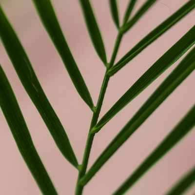 mpj-abstract-botanical-leaf-jpg