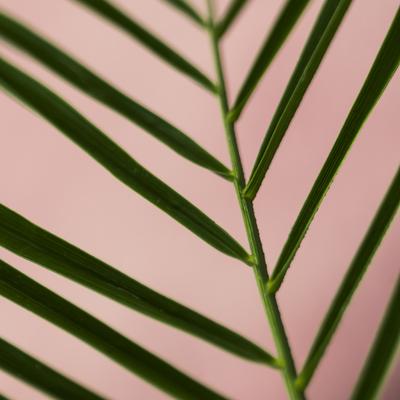 mpj-abstract-botanical-leaf-2-jpg