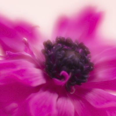 mpj-anemone-soft-pink-jpg