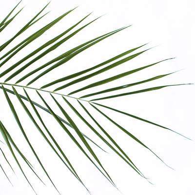 mpj-botanical-leaf-green-2-jpg