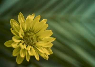 mpj-citron-yellow-floral-jpg