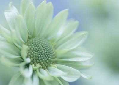 mpj-delicate-mint-flower-jpg