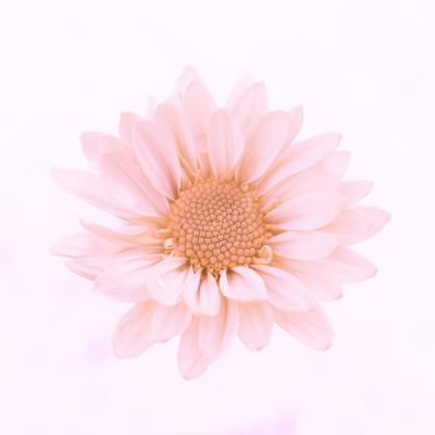 mpj-flower-beauty-portrait-jpg